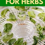 Best Dehydrator | Herb Dehydrator | Garden herb Dryer | Herb Dryer | How to Dry Herbs | Best Ways to Dry Herbs | Counter top Herb Dehumidifier | How to Prepare Herbs | #dehydrator #countertopappliance #appliancereview #reviews #kitchendiy #accessories