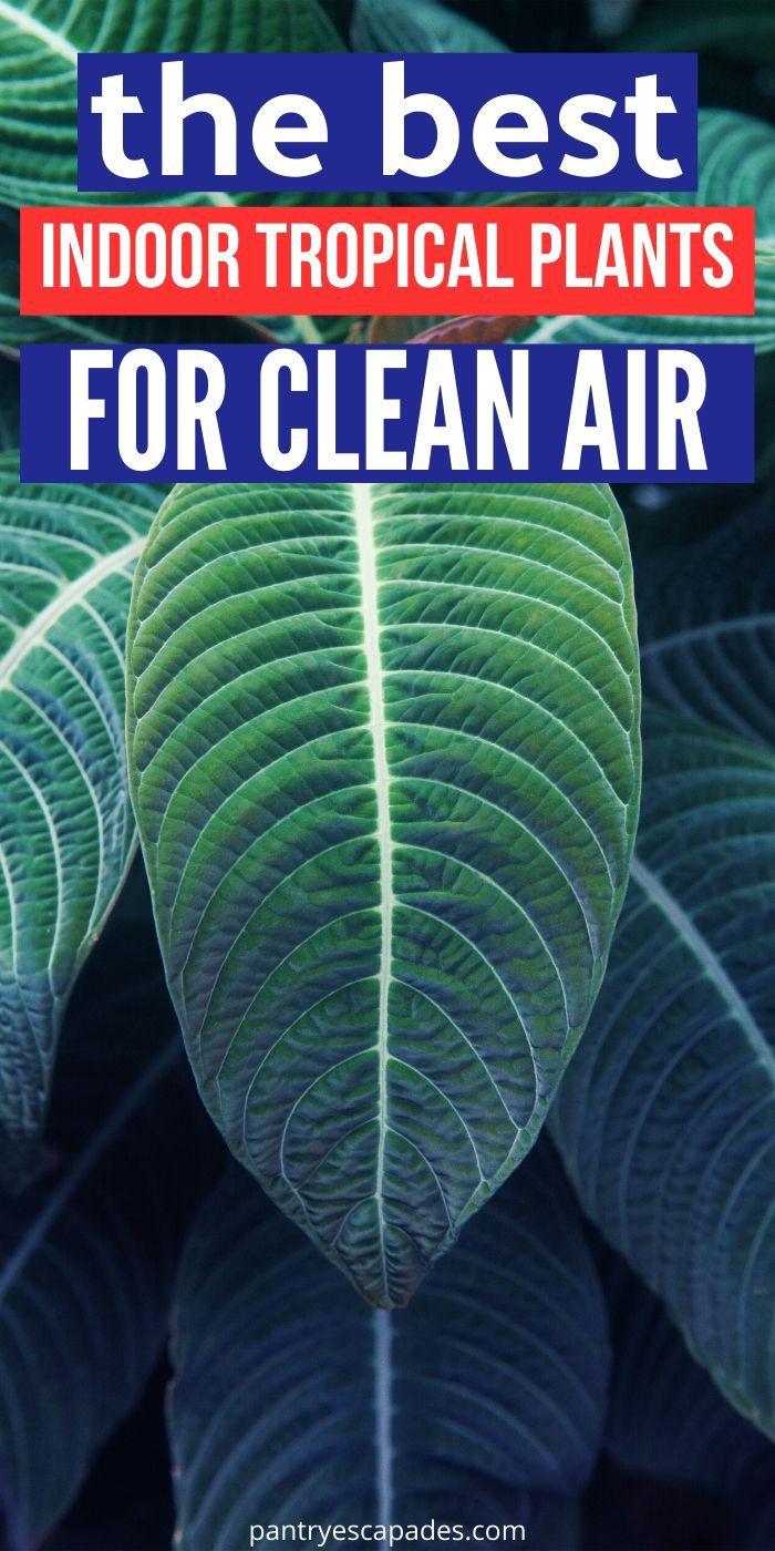 The Best Indoor Tropical Plants for Clean Indoor Air